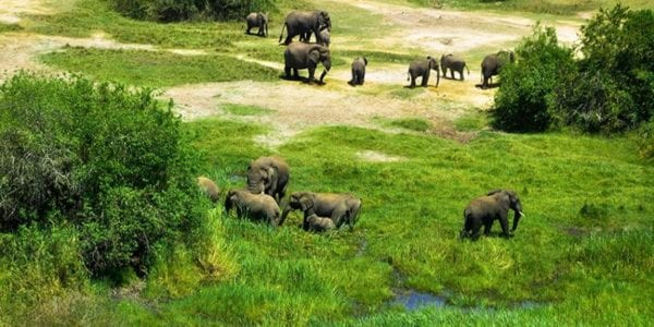 Why Visit Akagera National Park.