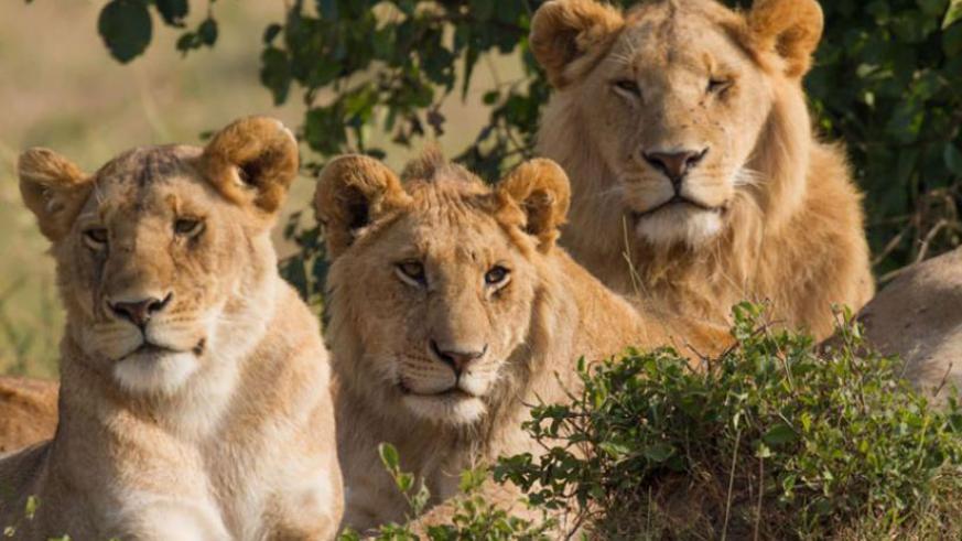 1 days Akagera safari Rwanda