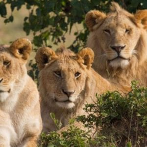 3 Days Akagera Wildlife Safari Rwanda