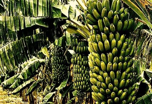 agri tourism Uganda