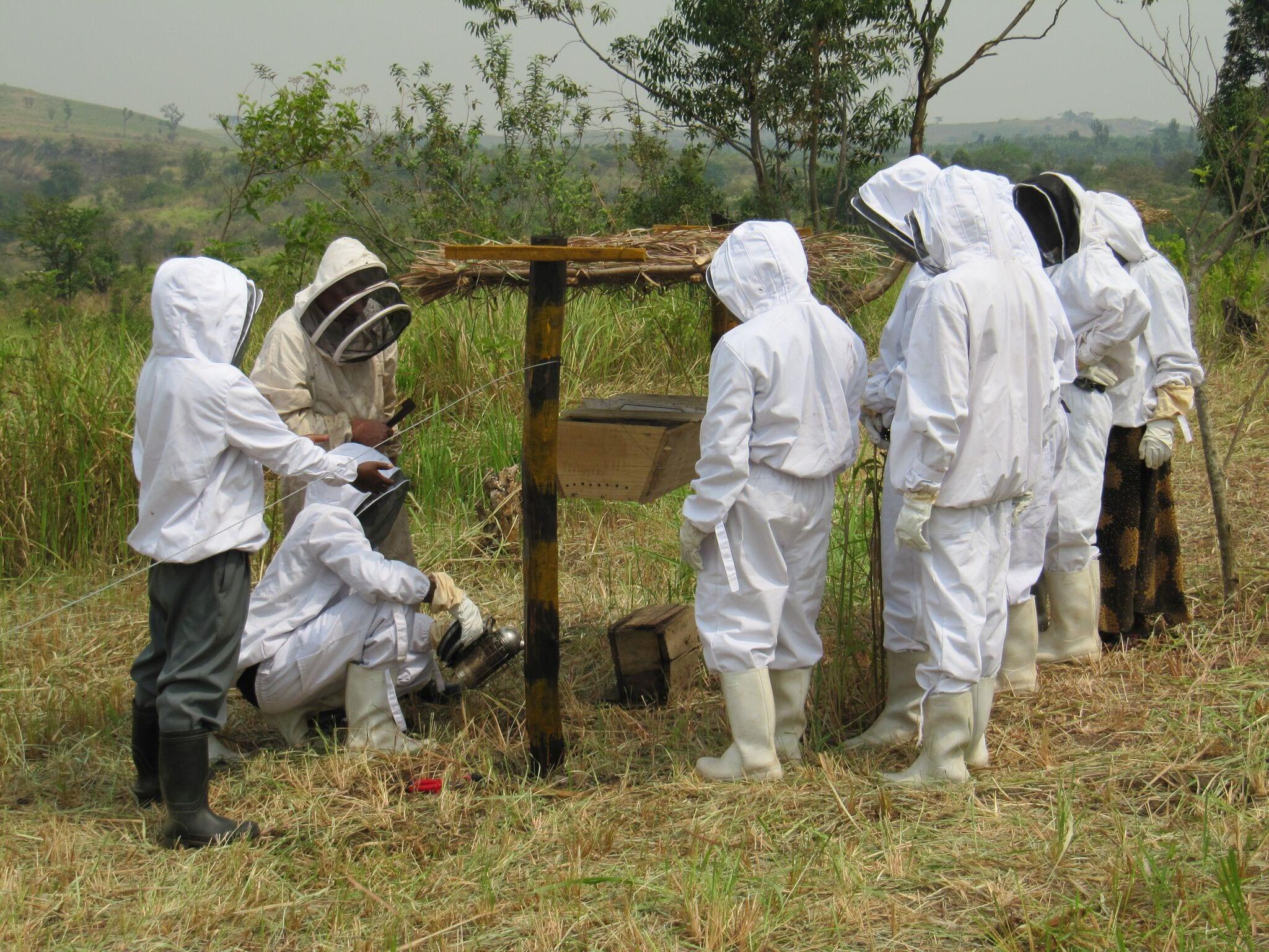 beekeeping agrotourism