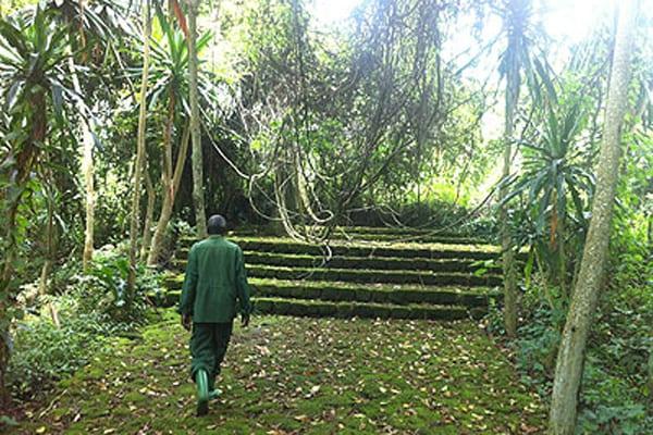 Buhanga Forest