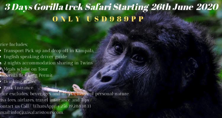 3 Days Discounted Gorilla Trekking Tour.