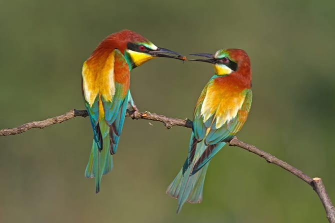 7 days Bird watching safari