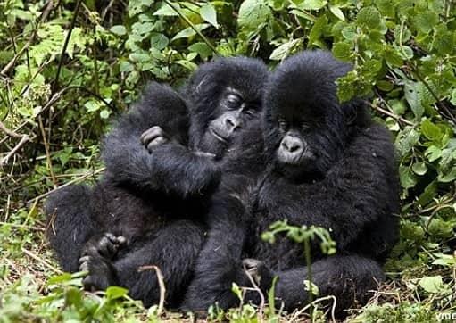 14 days Uganda gorilla tour