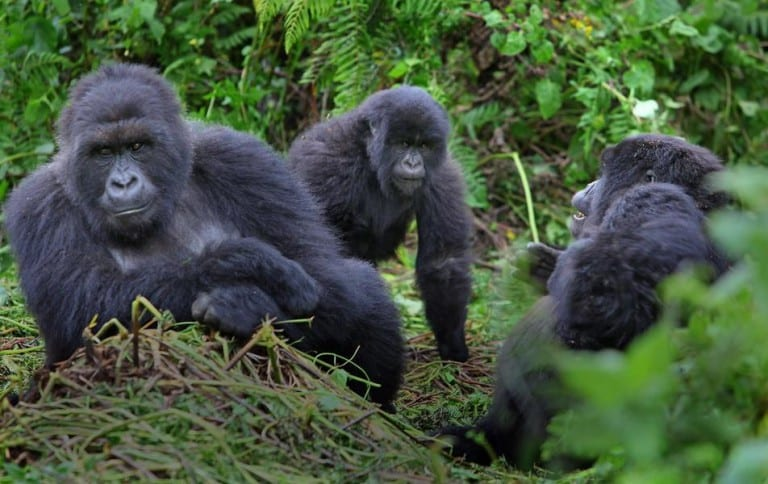 6 days Rwanda wildlife and gorilla tracking safari