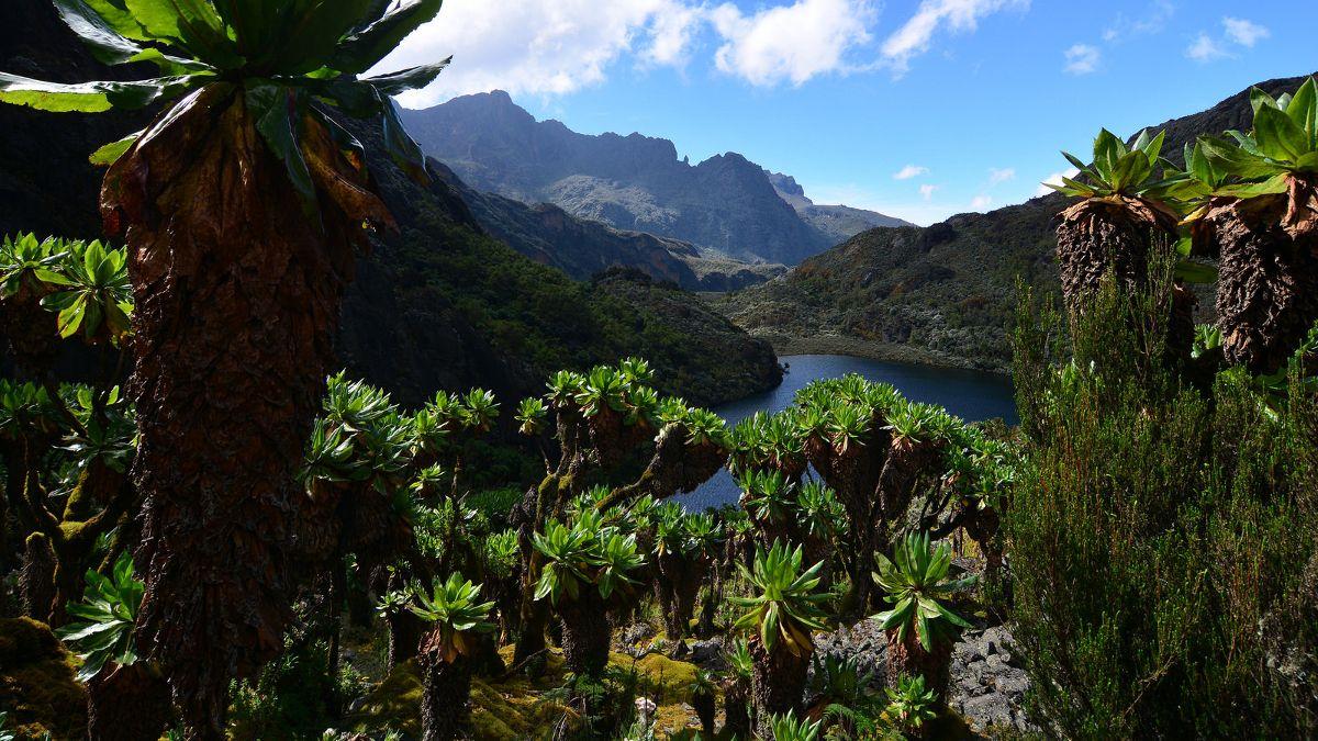 8 days Hike Mt Baker Rwenzori mountains