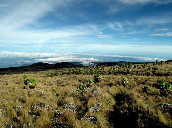 6 Days Mt Elgon Trek