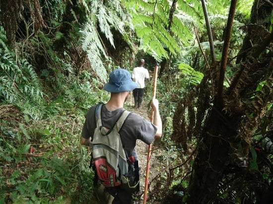 Nature walks / Forest walks in Bwindi