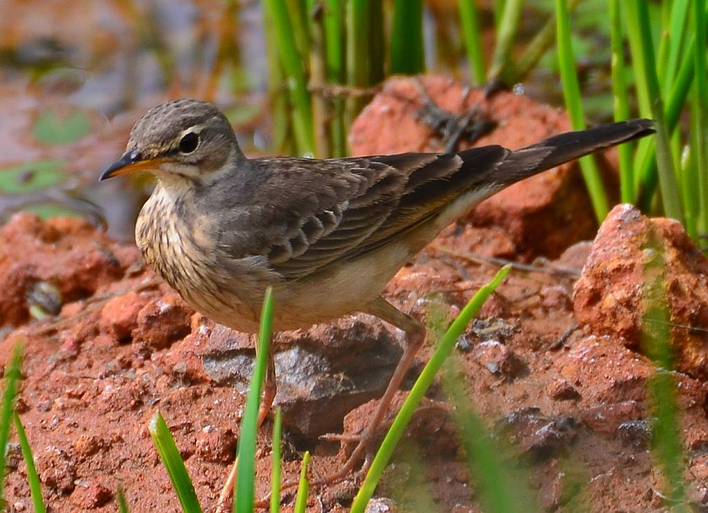 6 days bird watching safari Uganda
