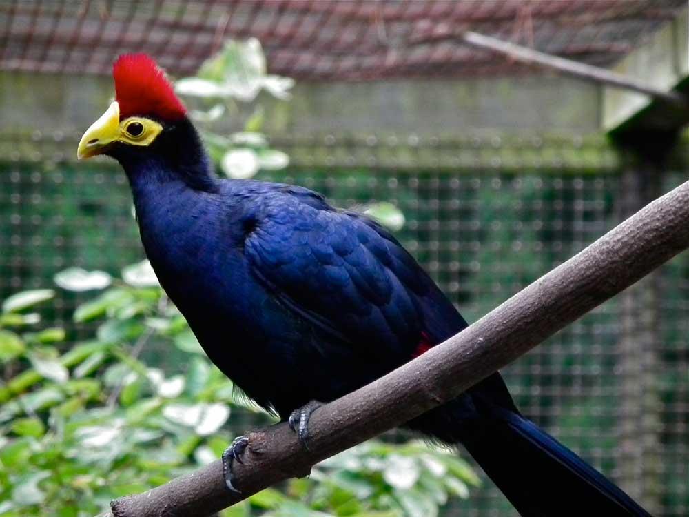 Rwanda Bird watching tour