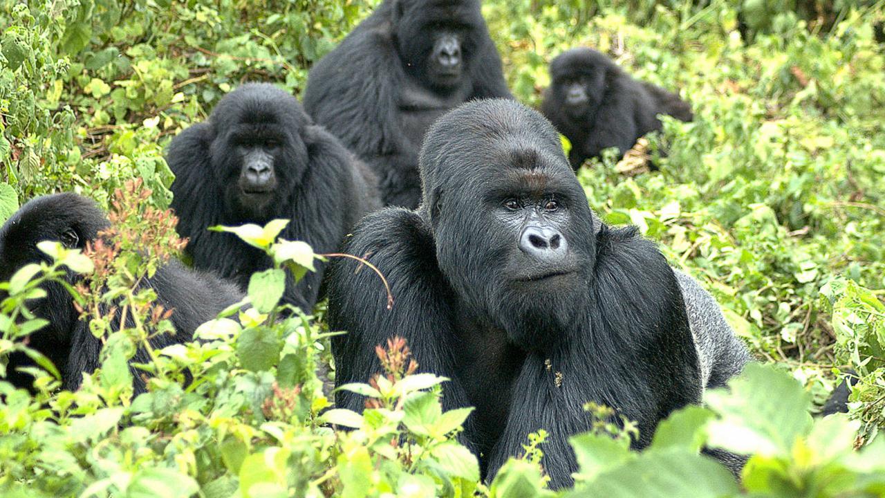 2 days gorilla tracking safari Rwanda