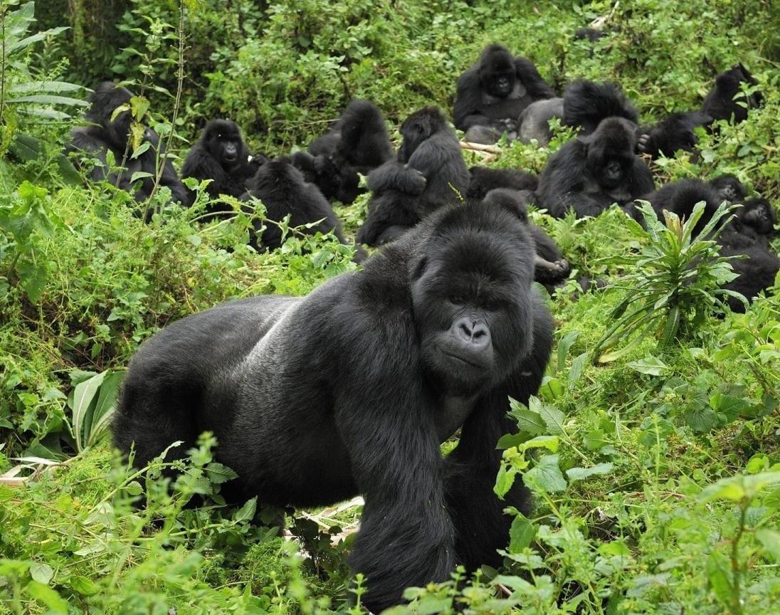 15 Days gorilla safari Rwanda Uganda