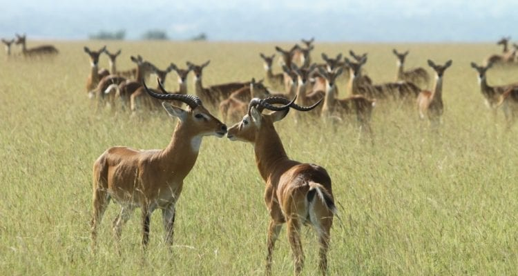 5 Things To Do In Kabwoya Wildlife Reserve