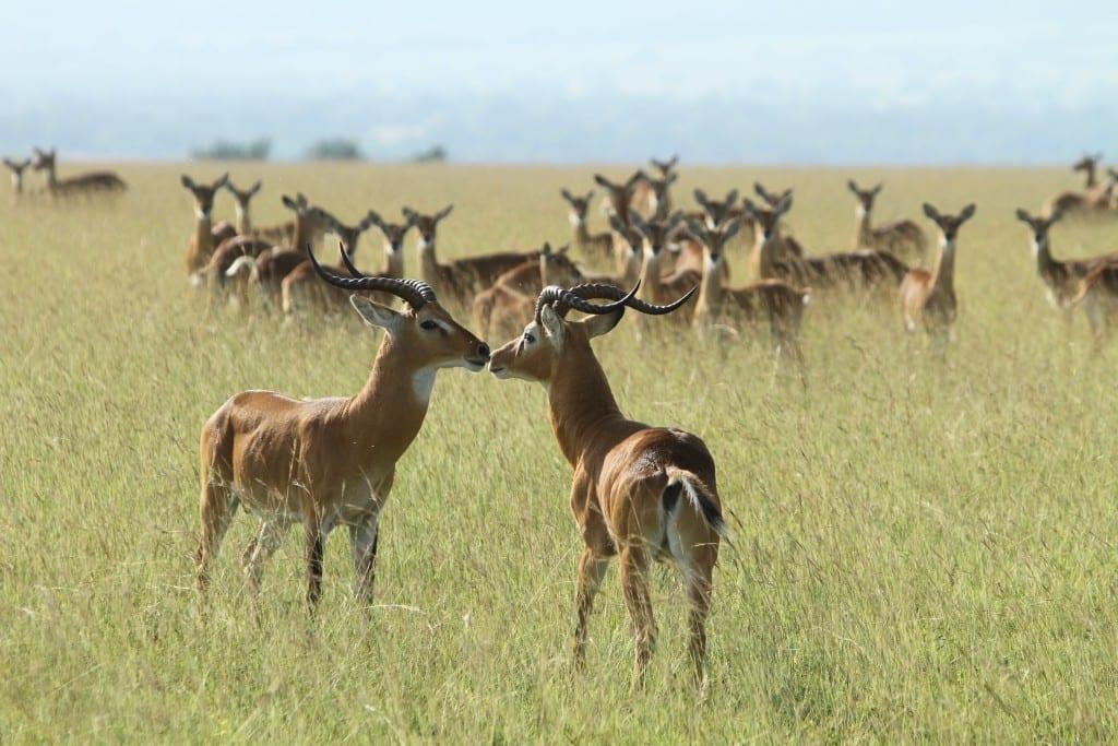 Kabwoya wildlife reserve.