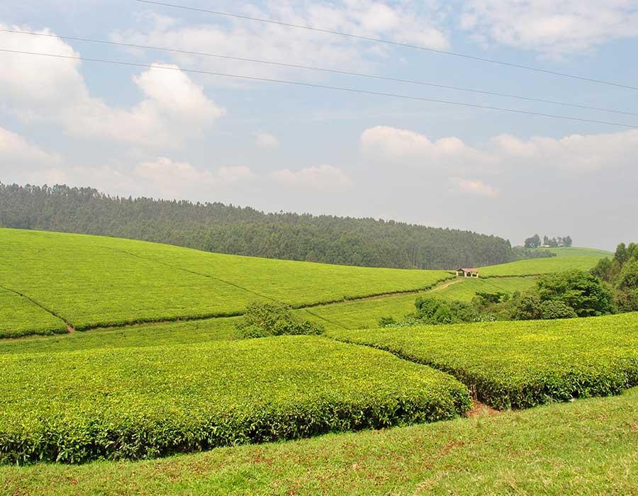 3 days Vanilla and Tea plantation agrotour